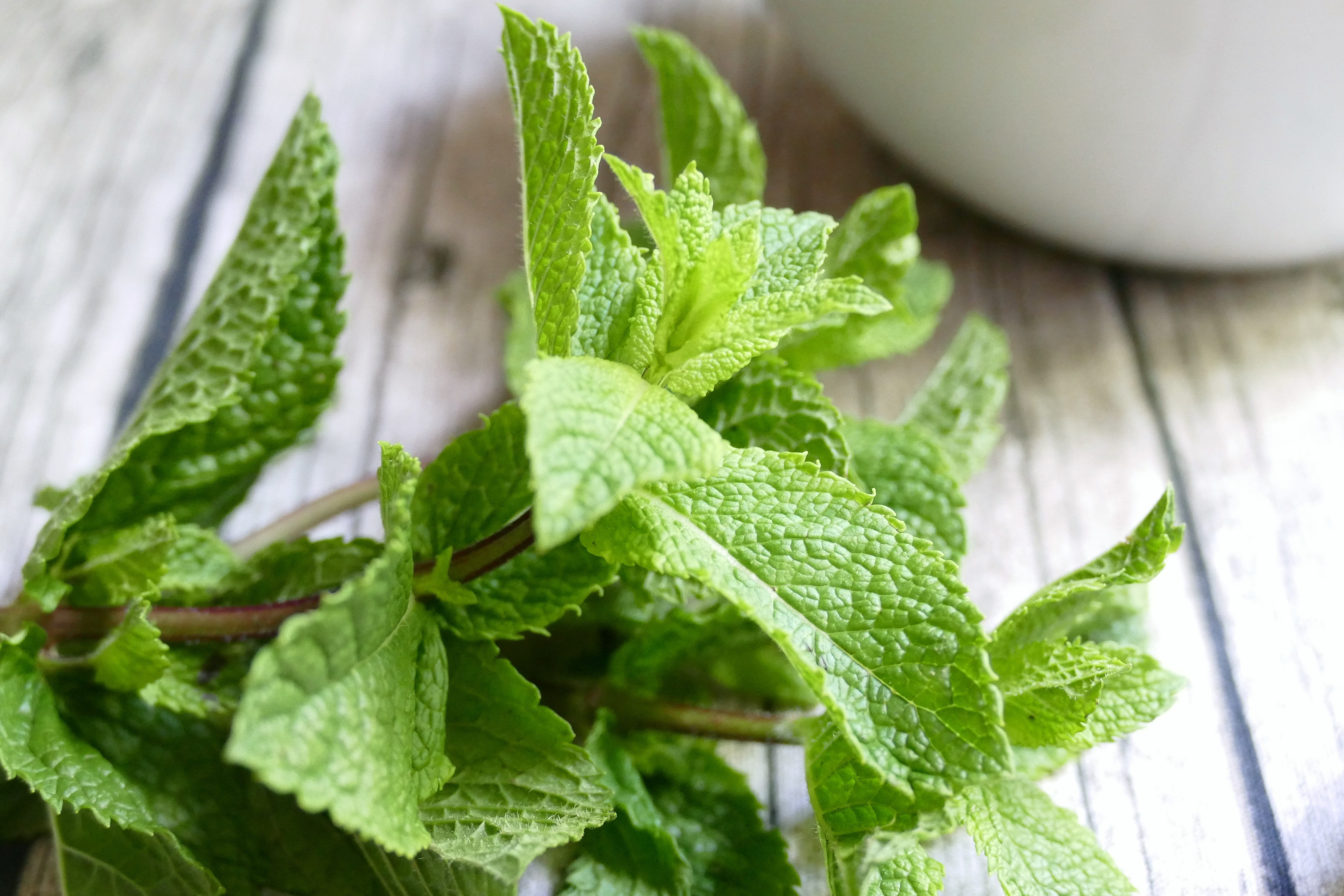 Peppermint leaves, from which peppermint oil is made
